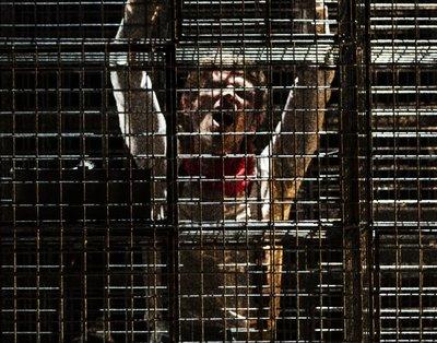 Imagen de portada del espectáculo Juguetes rotos
